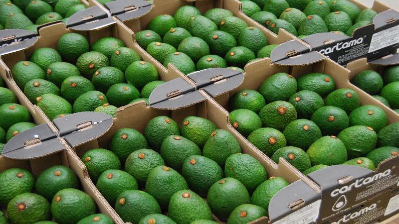 avocado8045