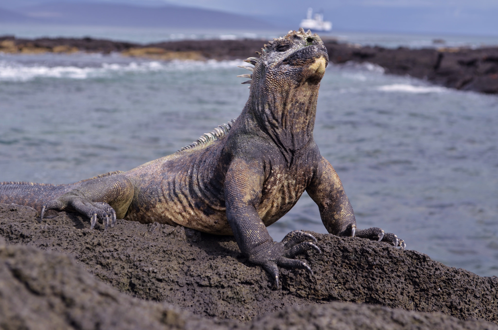 Galapagos Fragile Archipelago Switches Petrol For