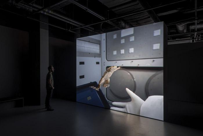 John Gerrard's simulation installation X. laevis (Spacelab) (2017)