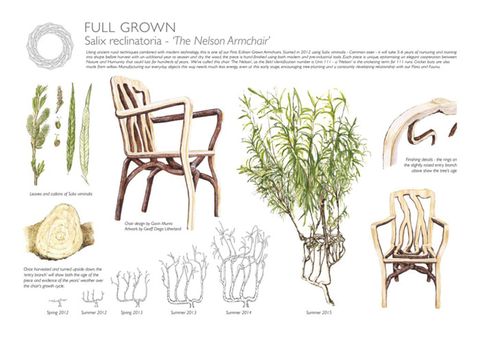 Over a period of four years a piece of furniture can be grown