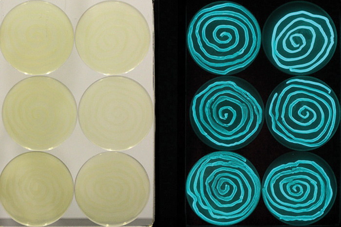 Astudio's Bacteria Bioluminescence research with biologist Dr Simon F Park and Brunel University. The research is studying the luminescence of photobacterium phosphoreum with a view to ultimately develop a marketable mood-lighting product