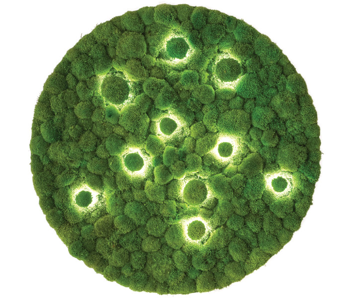 Moss is put to use again with Freund's moss lights