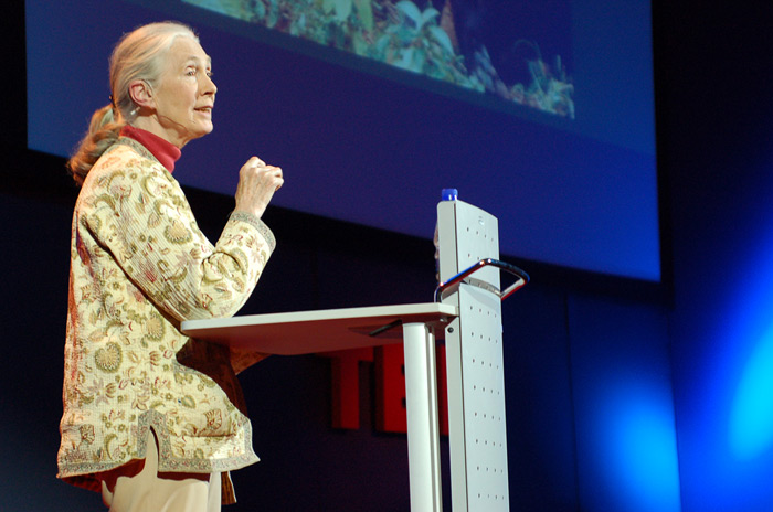 Jane Goodall, the world's most renowned expert on chimpanzees