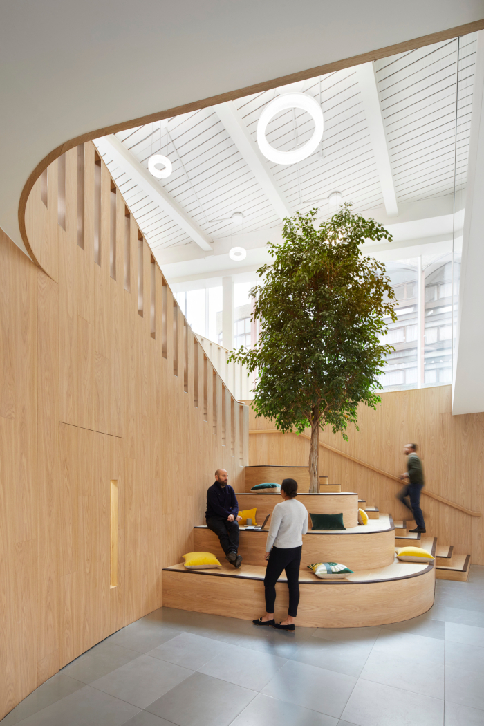 This image The ficus tree that occupies a stairwell between the ground and lower ground floors