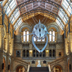 Hintze Hall, Natural History Museum by Casson Mann