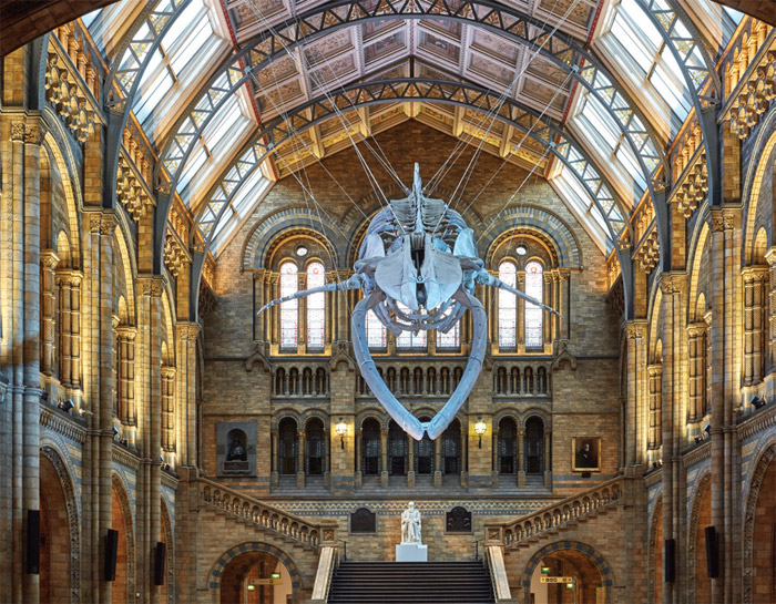 Museum Or Exhibition Space  Winner: Hintze Hall, Natural History Museum by Casson Mann