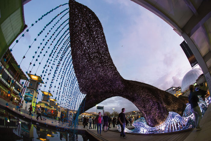 The Bristol Whales swim in a sea of plastic bottles