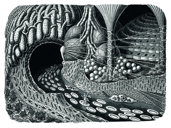 'Entering a gland cave. Ideal landscape picture of the microscopic structure of a man's body' (1924) All images taken from the Fritz Kahn Monograph Published By Taschen