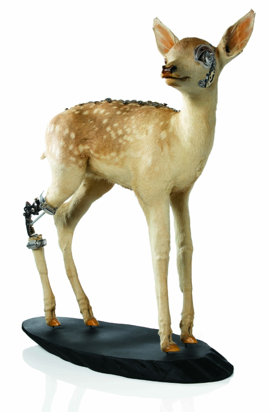 Fixed_Fawn_taxidermy_art_designcurial