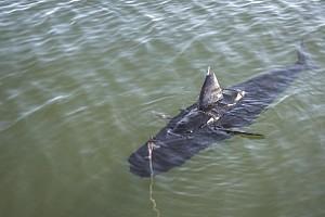 US Navy Drone Fish