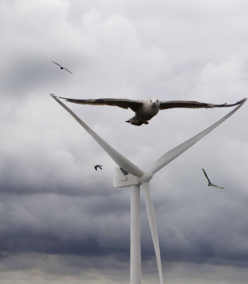 turbines birds